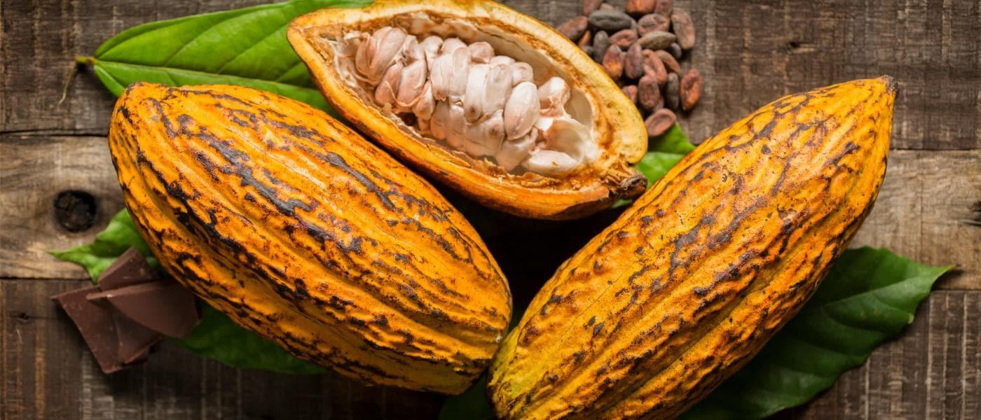 Gelbe, geschlossene und offene Kakaofrüchte auf Holzuntergrund