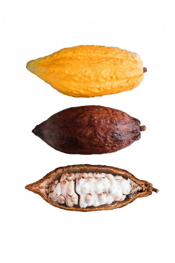 Kakaofrüchte in verschiedenen Stadien
