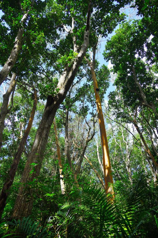 Afrikanischer Regenwald