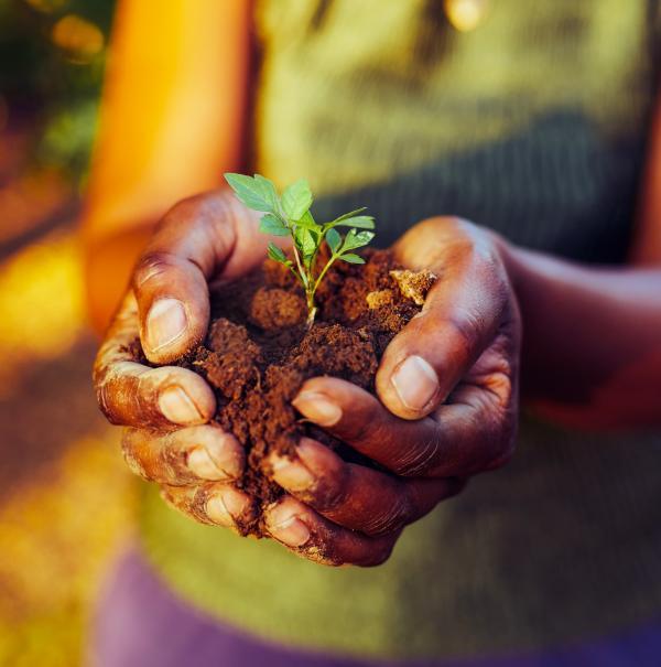 Frau hält Erde mit Sämling